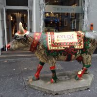 Christmas Kyloe cow