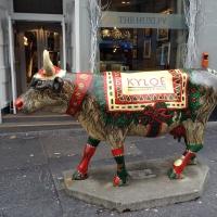 Christmas Kyloe cow